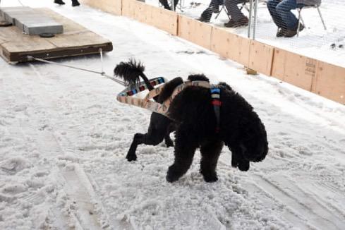 Oscar snow pull
